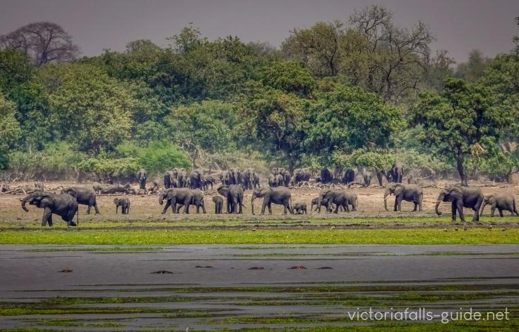 Elephants of Gonarezhou National Park, Zimbabwe
