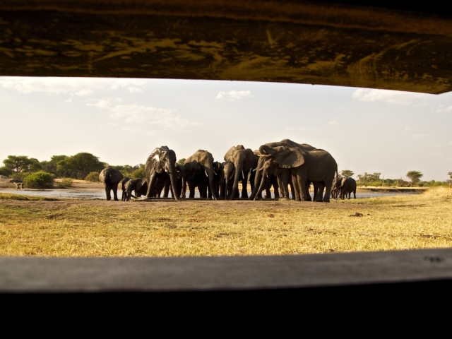 Elephants seen from the underground hide at The Hide Safari Camp in Hwange National Park, Zimbabwe