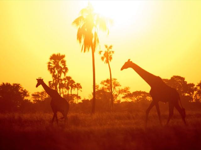 ...gorgeous giraffe...
