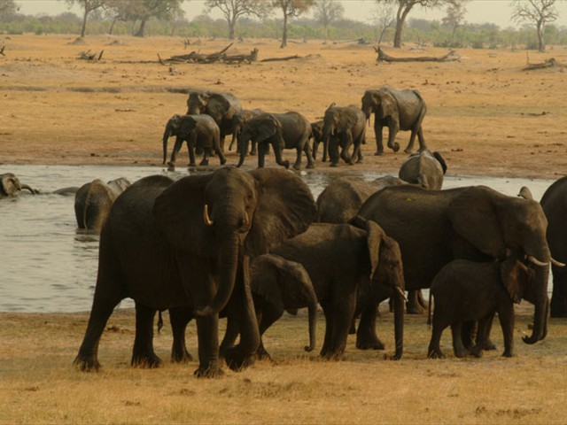 ...and of-course the magnificent elephants of Hwange