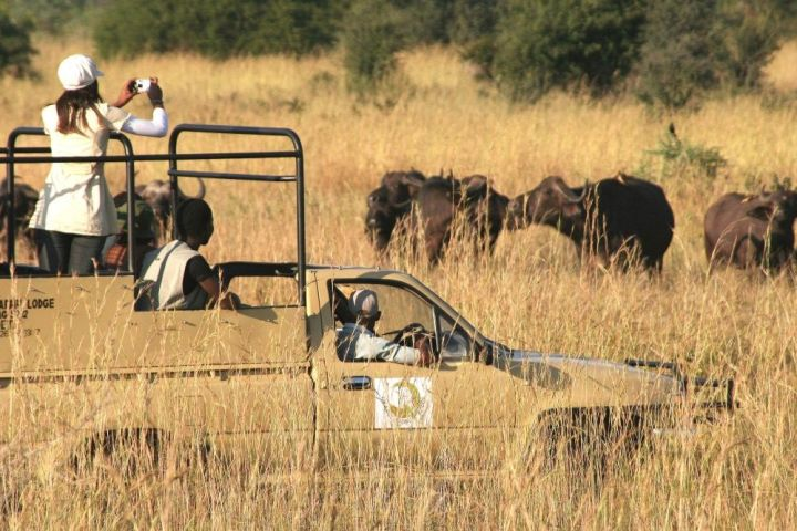 Game drive with Hwange Safari Lodge