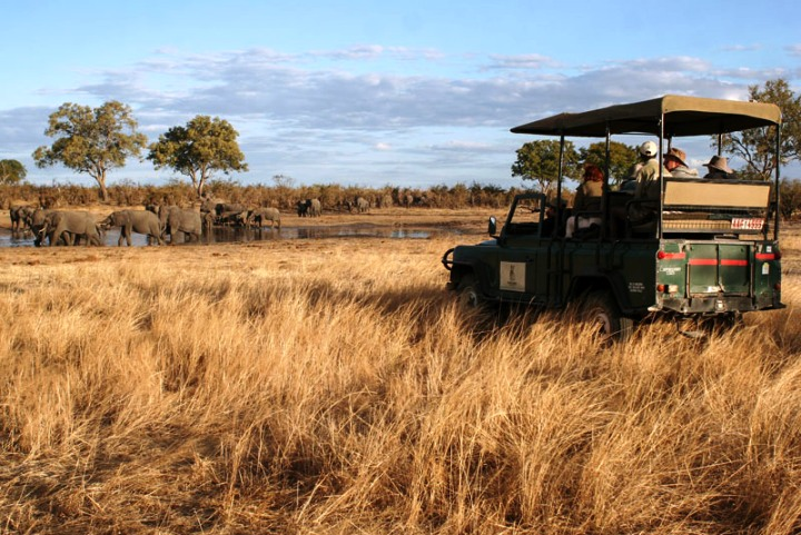 Game drives within Hwange