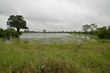 Hwange National Park in the rainy season