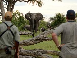 Game viewing safari in Hwange - Zimbabwe