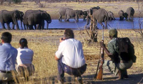 Optional walking safari with Imbabala Zambezi Safari Lodge - Zambezi National Park, Victoria Falls, Zimbabwe