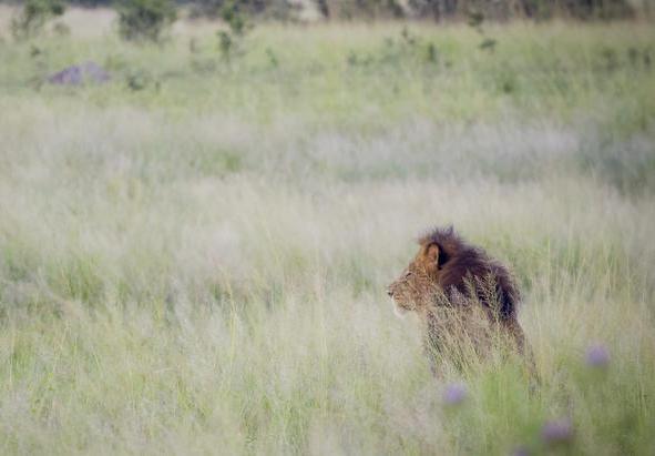 Ivory Lodge, Hwange National Park, Zimbabwe