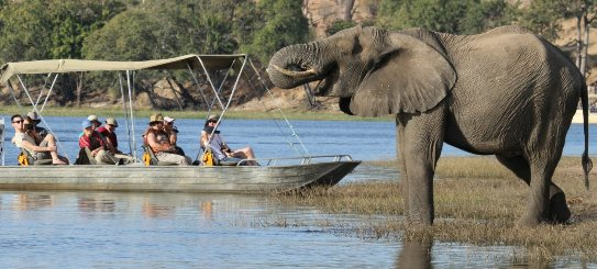 Guests on a river game cruise on the Chobe River