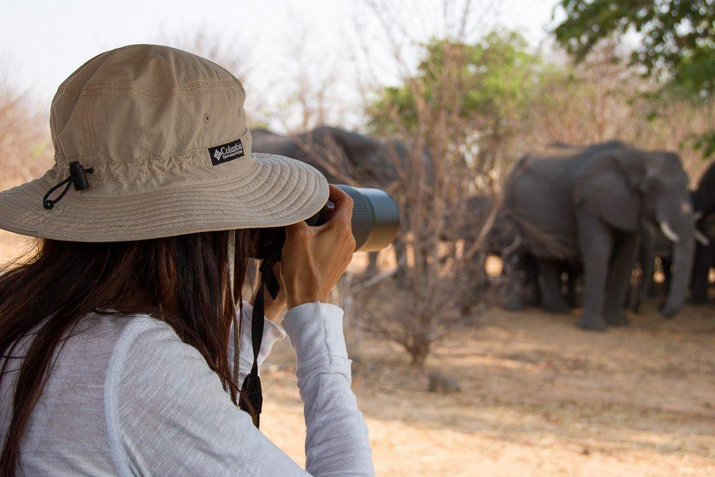 Day trips into Chobe National Park from Livingstone, Zambia, near Victoria Falls