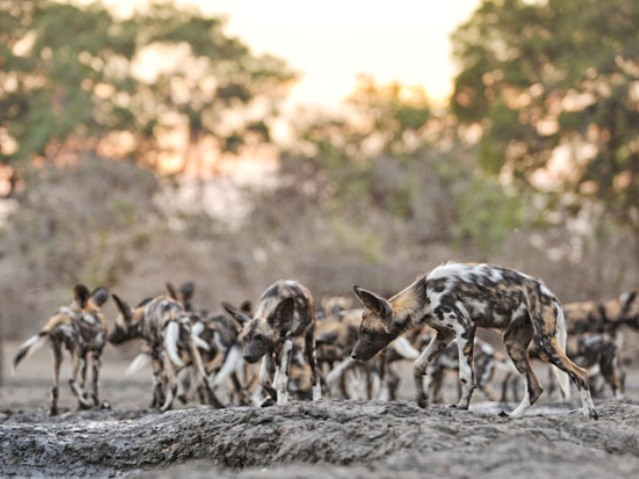 Kanga Camp - Mana Pools National Park, Zimbabwe