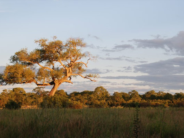 Hwange National Park near Kapula Camp - Zimbabwe
