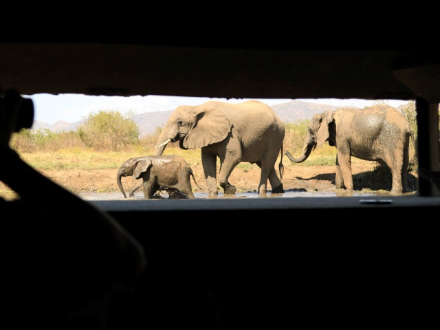 Elephants at the hide