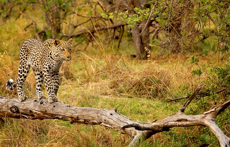 Wildlife photography by Lesanne from Victoria Falls, Zimbabwe