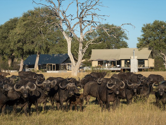 Linkwasha Camp receives many big visitors.