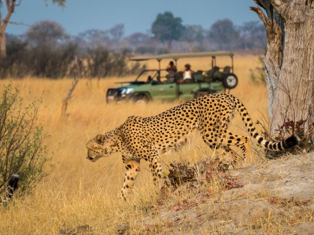 Game drive in Hwange National Park - Zimbabwe