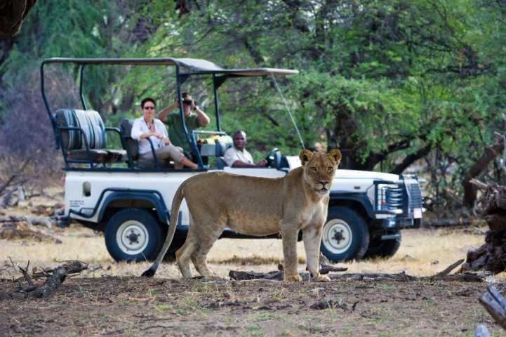 Game drive in Hwange National Park