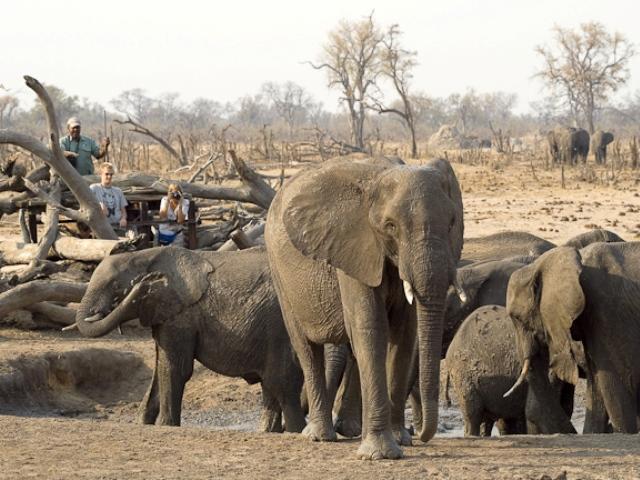 Log hide in Hwange National Park, Zimbabwe