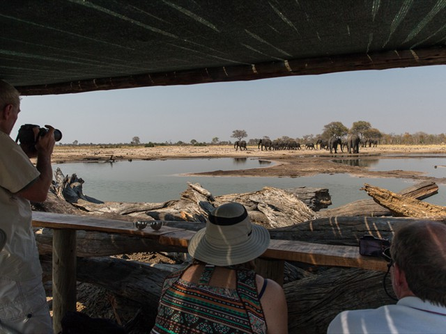 Log hide in Hwange National Park, Zimbabwe