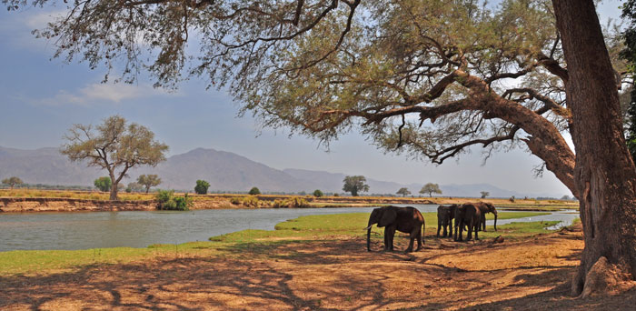 Elephants in Mana Pools National Park