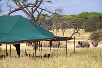 Akiba Kibwe Camp, South Serengeti, Tanzania