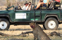 Game drive in Hwange National Park. Chobe, Victoria Falls, Hwange safari.