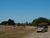 Chobe game drive with Chobe game lodge, Botswana