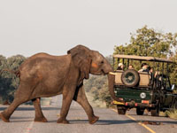 Chobe game drive in Botswana