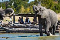 Taking a peak from the hide at Little Makalolo Camp, Hwange National Park, Zimbabwe