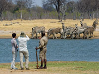 Game viewing on foot at Litle Makalolo Camp - Hwange National Park, Zimbabwe