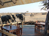 Locals at Nehimba Lodge, Hwange National Park - Zimbabwe