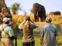 The best safari is on foot. Mana Pools National Park, Zimbabwe