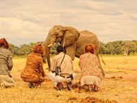 Game-viewing on foot from Somalisa Camp in Hwange National Park, Zimbabwe