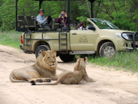 Game drive in Hwange National Park, Zimbabwe