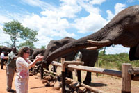 Meeting the Wild Horizons elephants which are rescued or orphaned - Victoria Falls, Zimbabwe