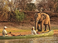 Elephant on a canoe trip in Mana Pools - Zimbabwe