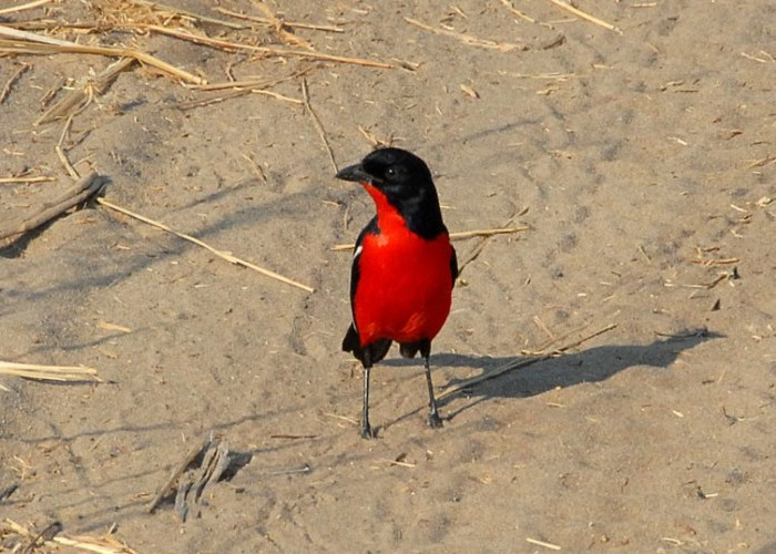 Miombo Safari Camp birding safari in Hwange National Park