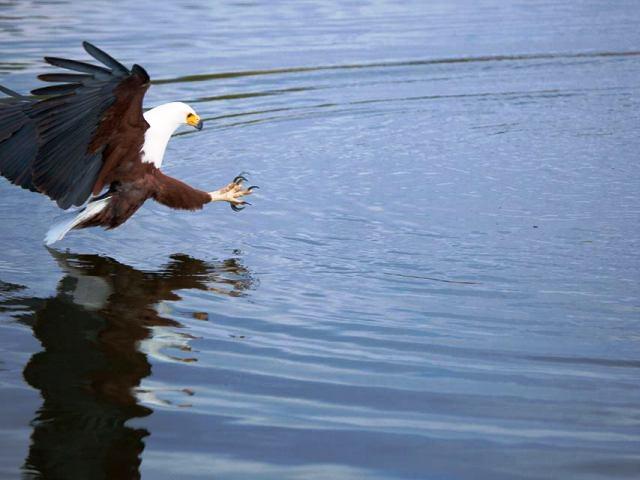 Birding with Musango Safari Camp on Lake Kariba