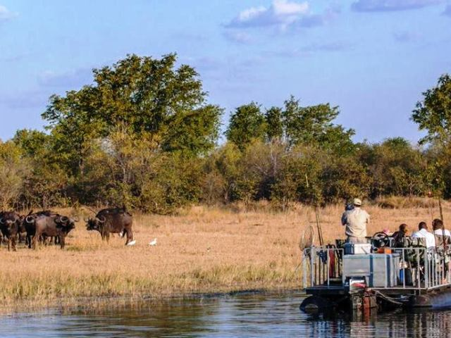 Buffalo on a boat cruise in Matusadona National Park