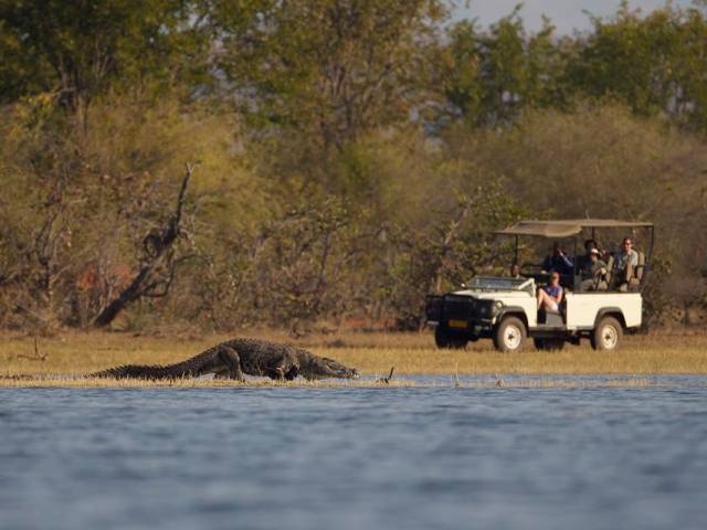 Game drives at Musango Safari Camp - Lake Kariba