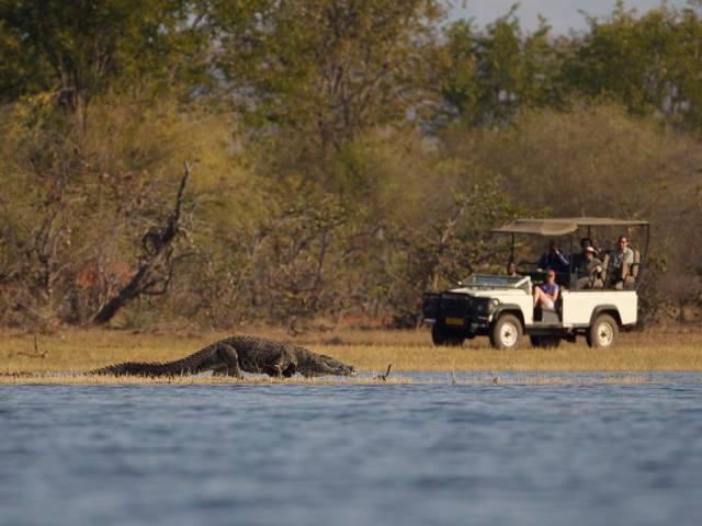 Game drives at Musango Safari Camp - Lake Kariba