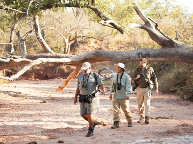 On walking safari with Steve at Musango Safari Camp - Lake Kariba