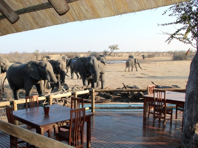 Elephants at the pool at Nehimba Lodge in Hwange National Park, Zimbabwe