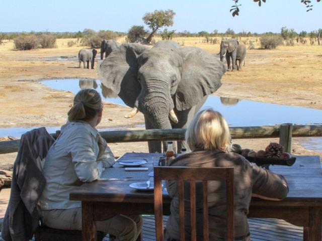 Elephants at Nehimba Lodge in Hwange National Park - Zimbabwe