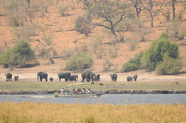 Elephants on the Chobe River - Ngoma Safari Lodge, Botswana