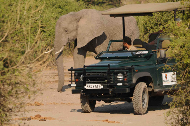 Game drive at Ngoma Safari Lodge - Chobe National Park, Botswana