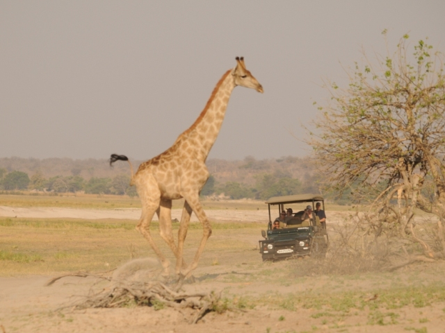 Botswana Accommodation and flights package - Ngoma Safari Lodge, Chobe, Botswana