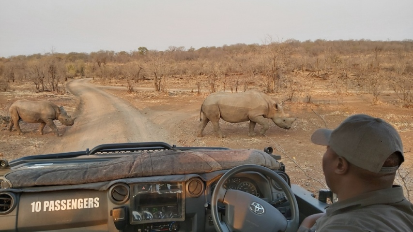 Rhino search game drive in Victoria Falls, Zimbabwe