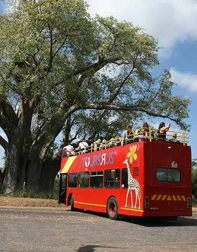 Bus stops at The Big Tree