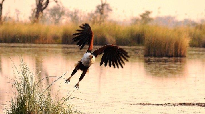 Over 500 bird species