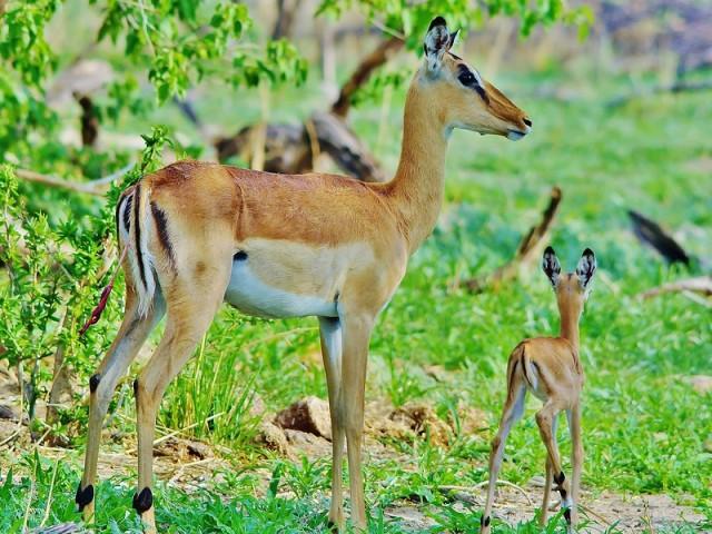 Zambezi National Park birding
