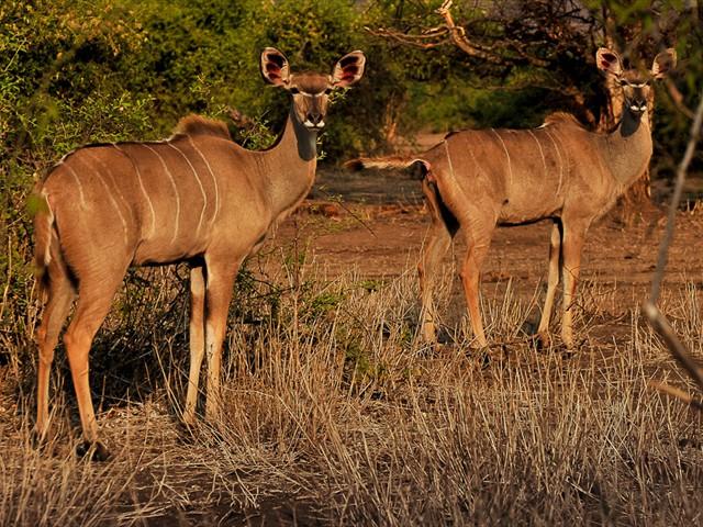 Game drives in Zambezi National Park